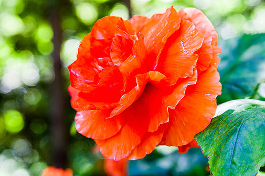 Orange You a Sight by Judy Wright Lott