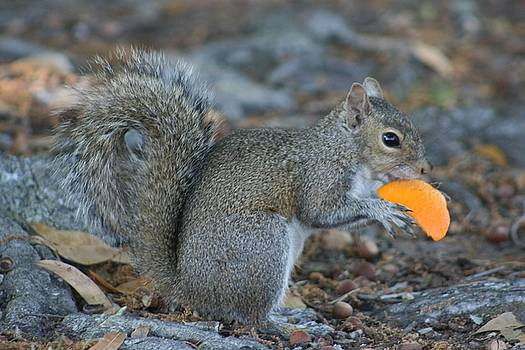 Orange you hungry... by Maria Young