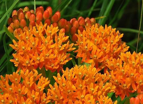 Orange You Pretty by Lori Frisch