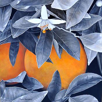 Oranges en Noir et Blanc by Muriel Dolemieux