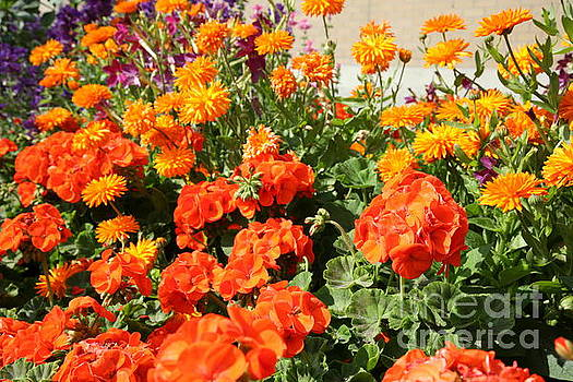 Chuck Kuhn - Oranges Yellows Flowers