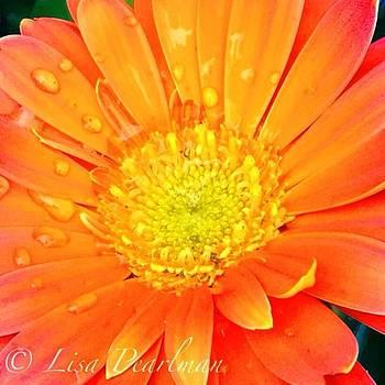 #oranges_up #splendid_flowers by Lisa Pearlman