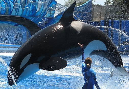 Orca and trainer by Cheri Carman