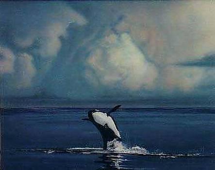Orca by Angel Ortiz