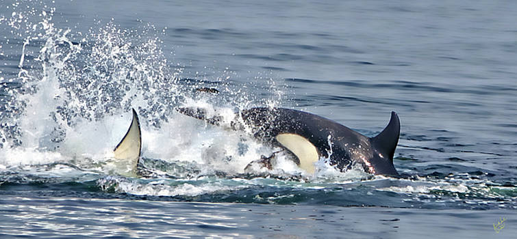 Orca Froth by Rick Lawler