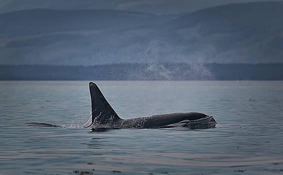 Randy Hall - Orca Male
