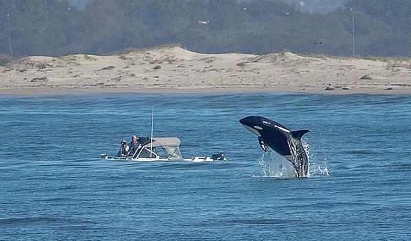 Orca North River 3 Sept 2017 by Randy Straka