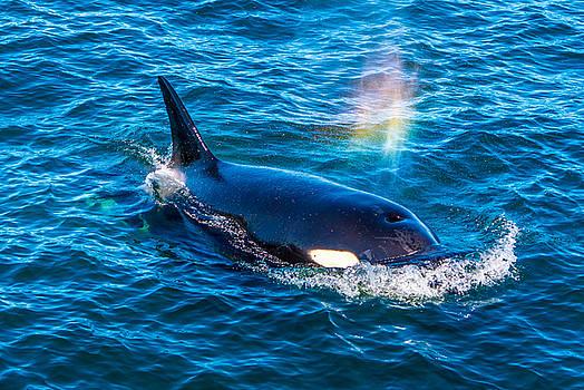 Randy Straka - Orca Rainblow Monterey Bay