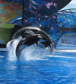 Orcas In Motion by Cheri Carman
