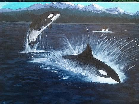 Orcas by John Prenderville