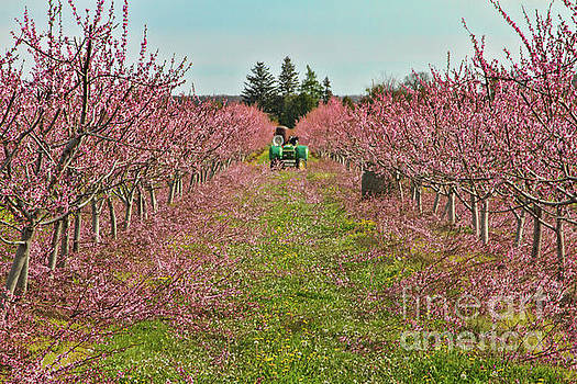 Orchard at Work by Marilyn Cornwell