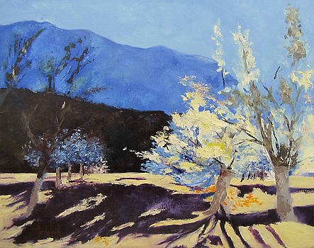 Orchard by Barbara Andolsek