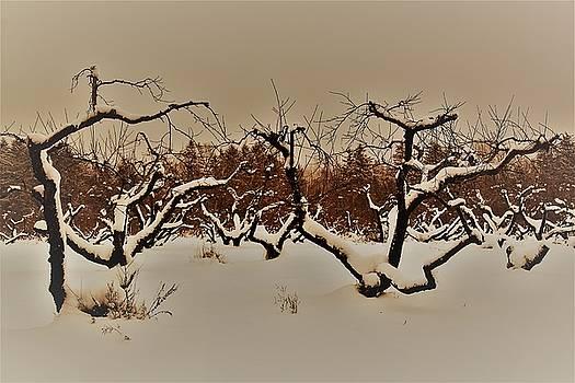 Orchard  by Gerald Salamone