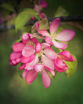 Orchard Glen Blossoms by Betsy Armour