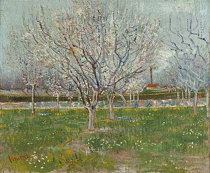 Orchard In Blossom Plum Trees by Artistic Panda