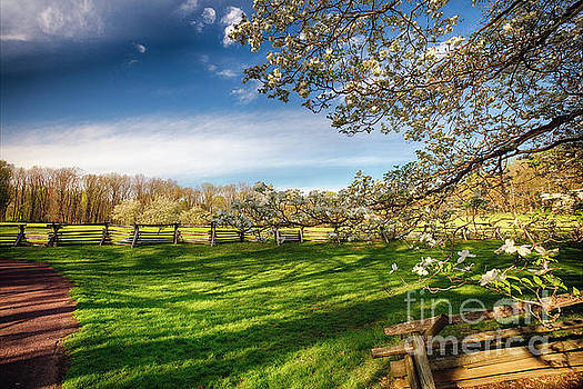 Orchard with Blooming Trees by George Oze