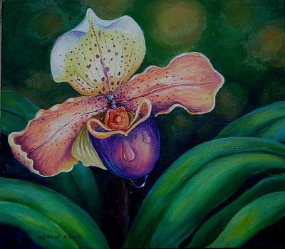 Edoen Kang - Orchid - Lycaste Aquila