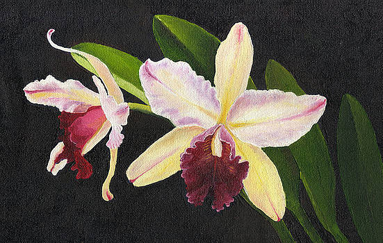 Orchid 2 by Agnes Rajesh