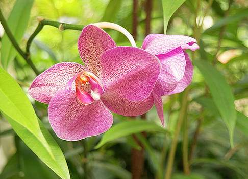 Orchid #2 by Michael Colgate