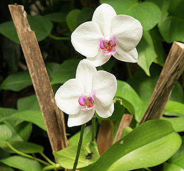 Orchid #3 by Michael Colgate