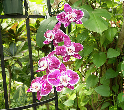 Orchid #4 by Michael Colgate