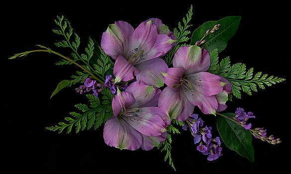Marsha Tudor - Orchid Alstroemeria