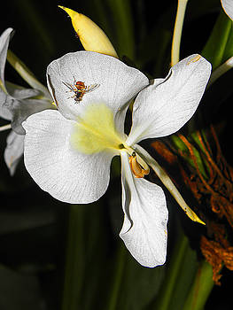 Elizabeth Hoskinson - Orchid and Friend
