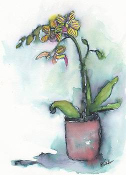 Orchid by Bev Veals