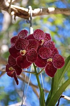 Orchid Bouquet by Michiale Schneider