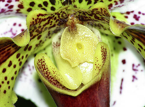 Orchid Close Up by Wally  Franiel