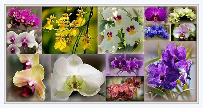 Rosanne Jordan - Orchid Collage