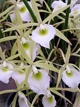 Dora Miller - Orchid Embrace