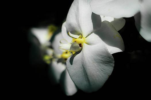 Orchid Escape by Scott Wyatt