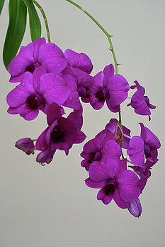 Orchid Floral by Aimee L Maher ALM GALLERY