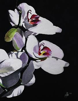 Orchid Flower by Kim Selig