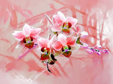 Orchid Flowers 10 by Susanna Katherine