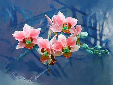 Orchid Flowers 8 by Susanna Katherine