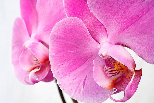 Gaspar Avila - Orchid flowers closeup