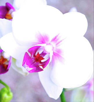 Orchid Gaze by Tammy  Shiver