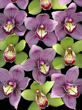 Christopher Gruver - Orchid Group Two