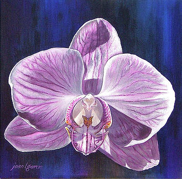 Orchid I by Joan Garcia