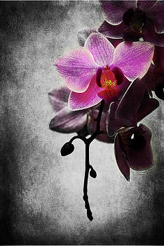Hannes Cmarits - orchid IV