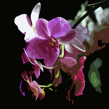 James Hill - Orchid