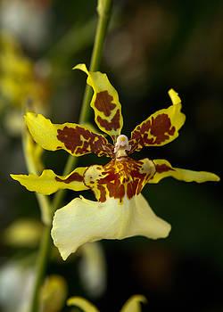 Orchid by Jorge Mejias