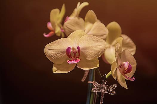 Orchid  by Maxwell Dziku