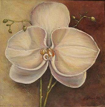 Orchid by Mirjana Gotovac