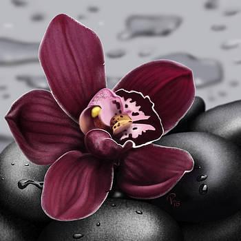 Orchid by Pia Langfeld