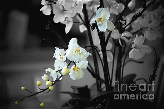 Orchid Selective Color by Rich Collins