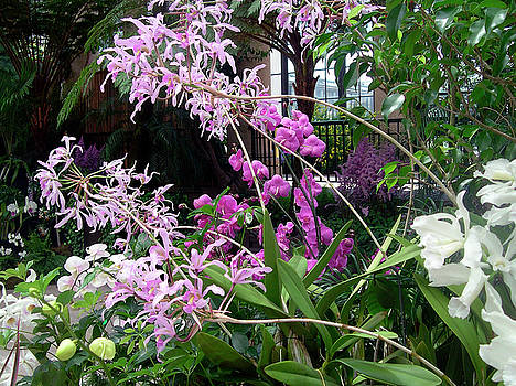Susan Maxwell Schmidt - Orchid Sprays in the Atrium