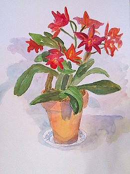 Orchid by Thom Duffy